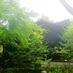 森の中のアトリエへの画像