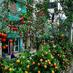 『フルーツがなる街路樹』の画像